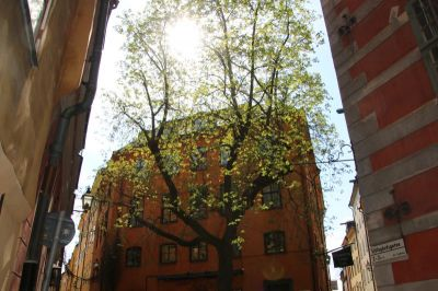 A nice square with a beautiful tree in the old town