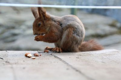 A lovely squirrel